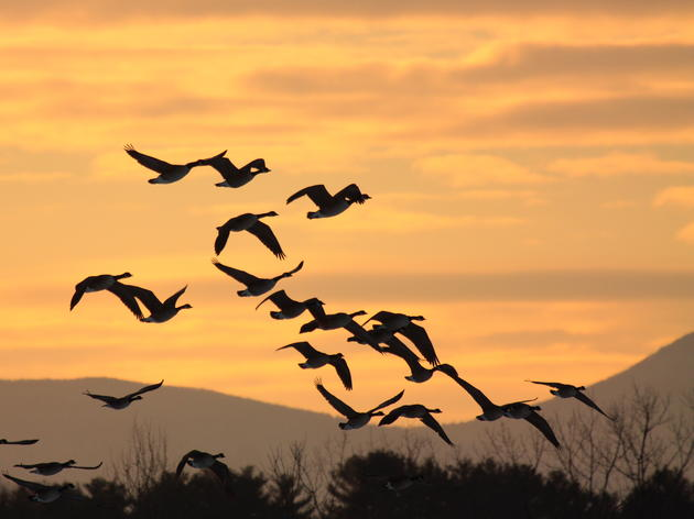 Montezuma Audubon hosting birding tour Nov. 20
