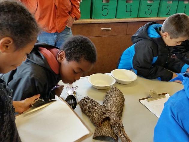 Montezuma Audubon Center to offer summer camps