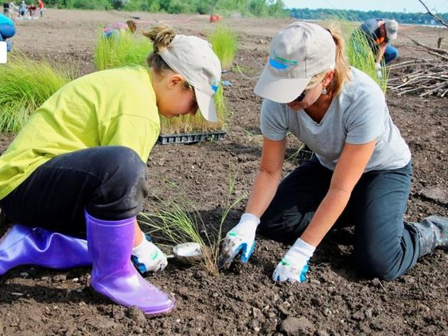 Community volunteers build homes for wildlife while transforming the Onondaga Lake shoreline
