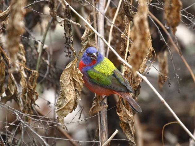 Rare Bird Takes Up Residency in Prospect Park