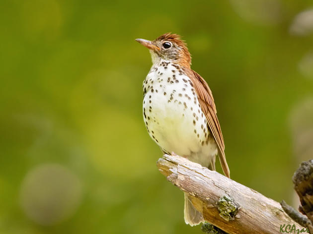 Audubon New York Releases New Technical Guide to Improve Forest Bird Habitat