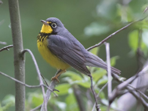 Audubon New York Offers Free Forester's Guide