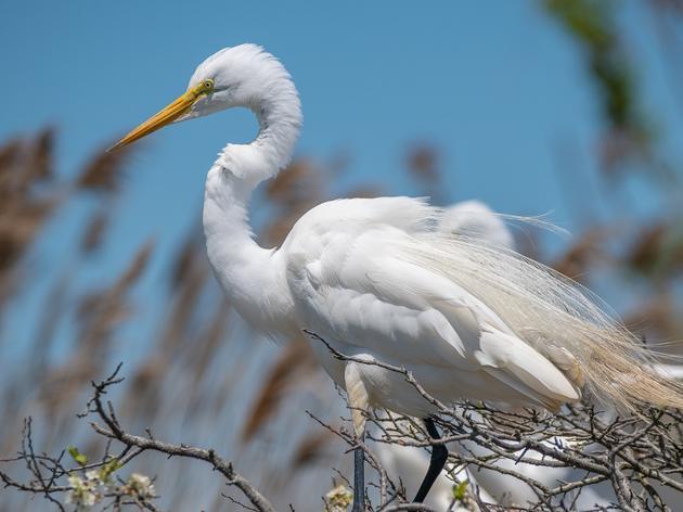 Photographers Capture Importance of Conservation