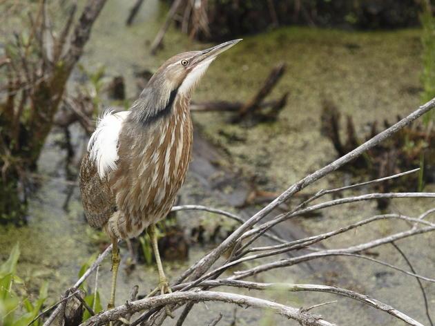 MEMORANDUM OF SUPPORT - Freshwater Wetlands Act