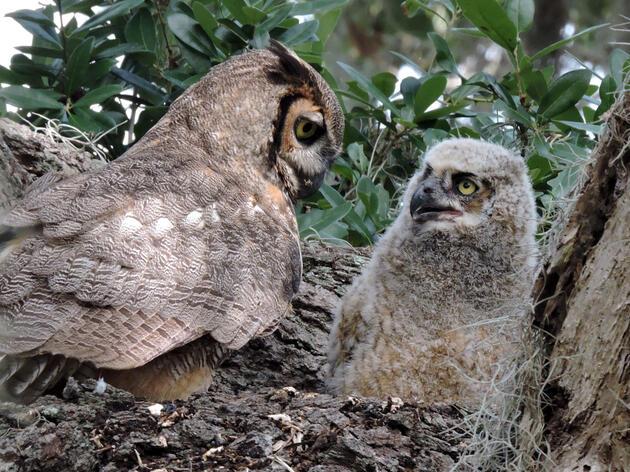 Happy Owl-ween!