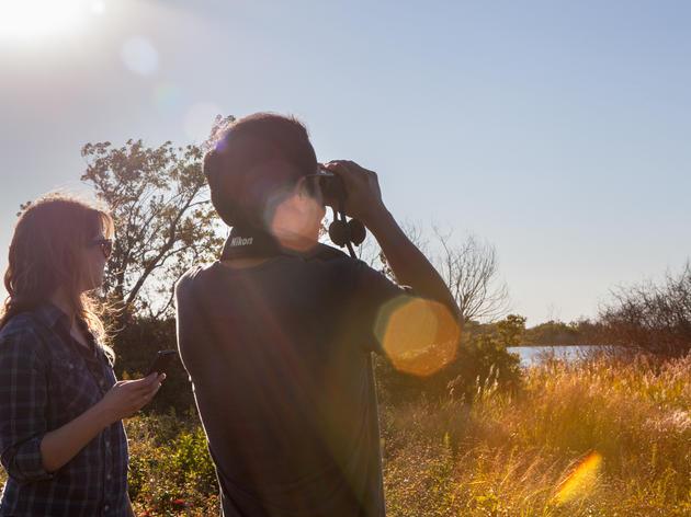 How To Participate: New York Breeding Bird Atlas