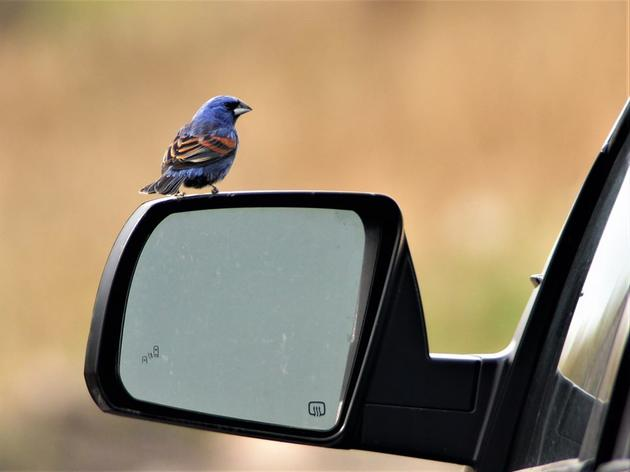 The Issue with Birds and Glass [plus webinar]