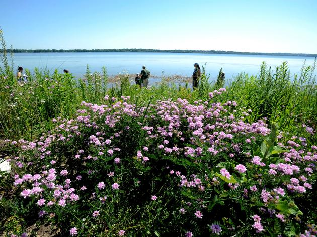 Plant Lists for Onondaga Lake Restoration