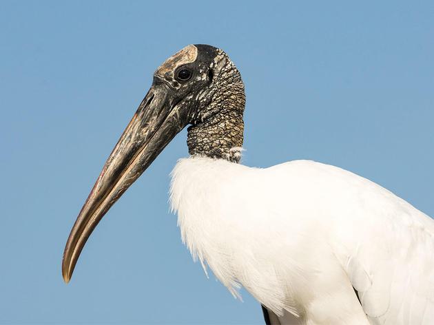 "Audubon: ""Farm Bill is Critical for Birds and Agriculture"""