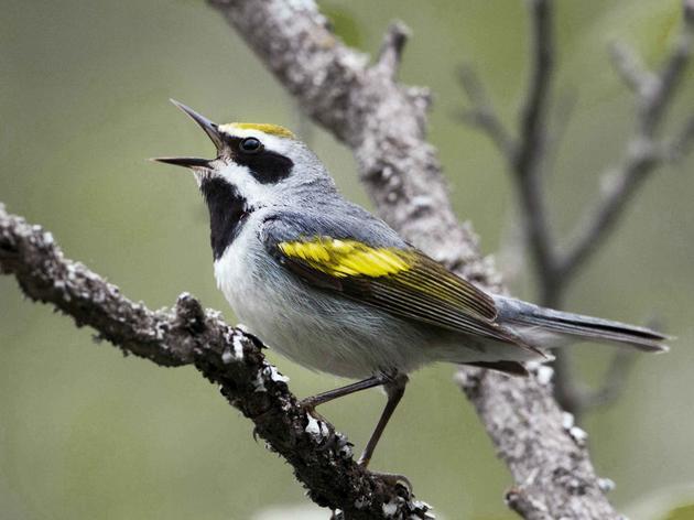 Bird-Focused Habitat Management Workshop on April 30th for St. Lawrence Valley Land Owners