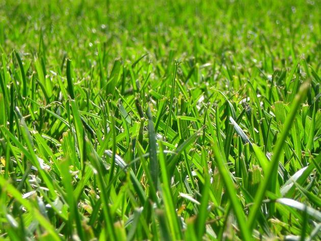 Lawn Pesticides