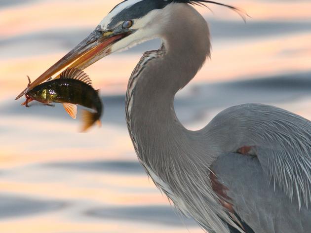 Long Island Important Bird Areas