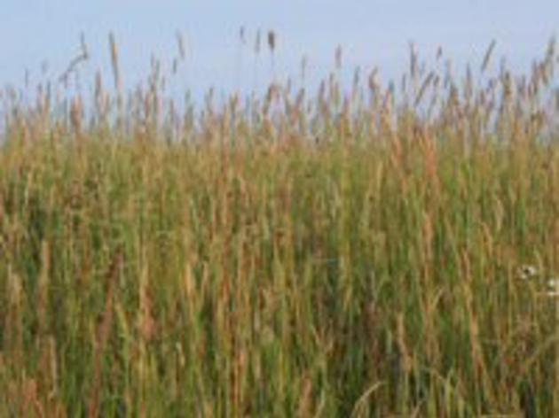 Grassland bird family pasture walk announced