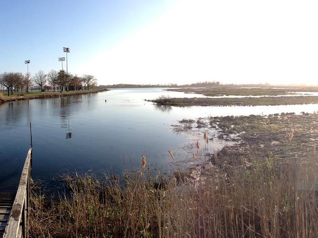 Long Island-Based Salt Marsh Work Aims to Create More Resilient Coastline
