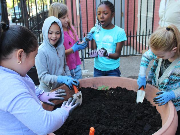 Equity, Diversity, and Inclusion at Audubon New York