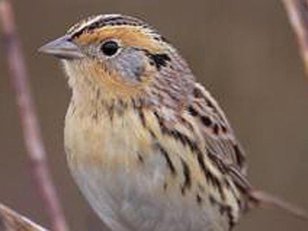Audubon Action Network