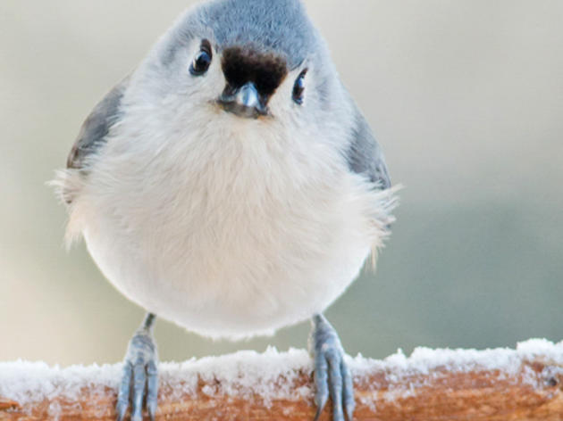 Welcome Winter Birds to Your Yard