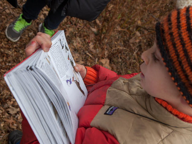 How Birdwatching Can Help Kids Learning About Math
