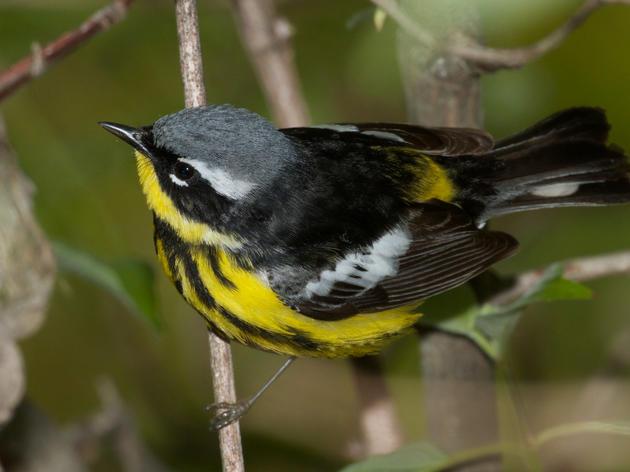 Prospect Park Important Bird Area