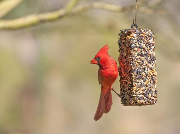 Guides to Bird Feeding