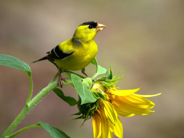 Plants for Birds in a Warming World