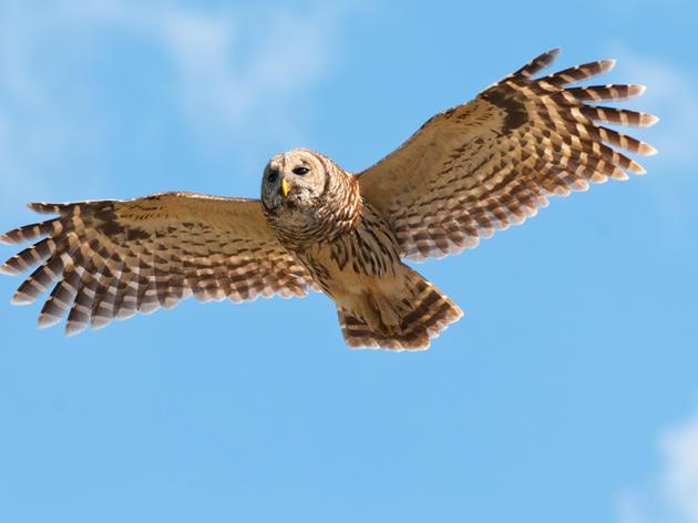 Second annual Montezuma Audubon golf tournament announced