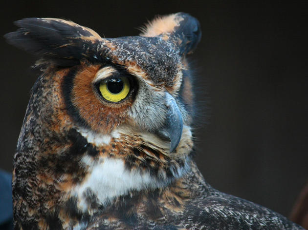Snap selfies with owls and more at Montezuma Audubon's 10th Wildlife Festival