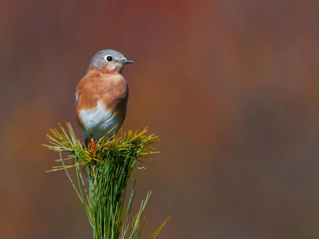 FM Magazine: Audubon New York