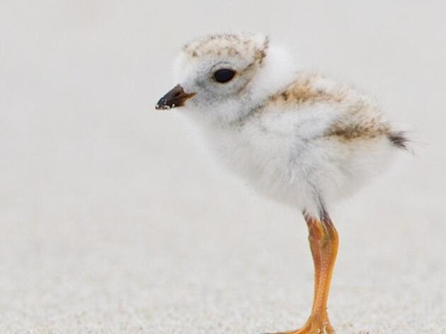What To Do With an Injured or Orphaned Bird