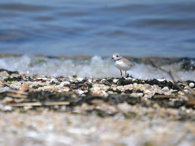 2019 Shorebird and Seabird Conservation Highlights
