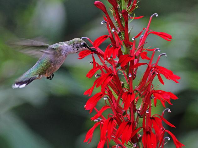 Buying Seeds? Attract and Protect Birds with Native Plants