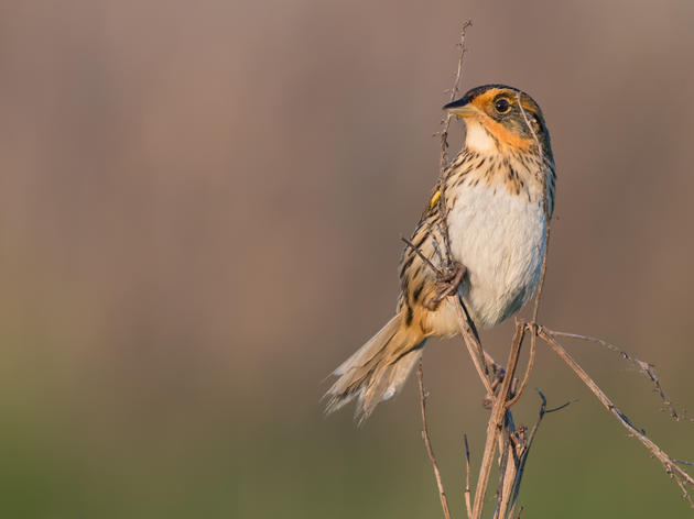 Best of 2019: Audubon New York in Action