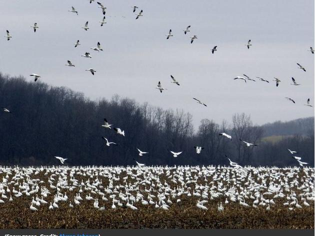 The Best Places in America to See Fall Bird Migrations