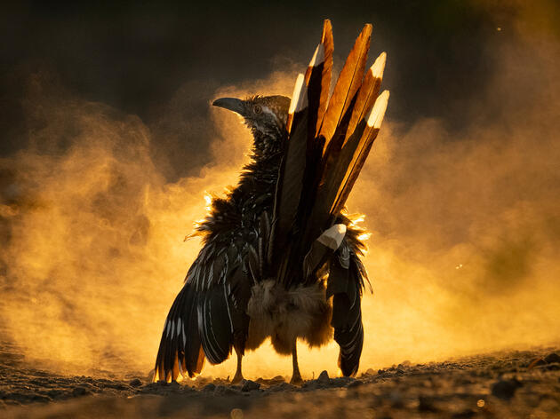 The 2021 Audubon Photography Awards: Winners and Honorable Mentions
