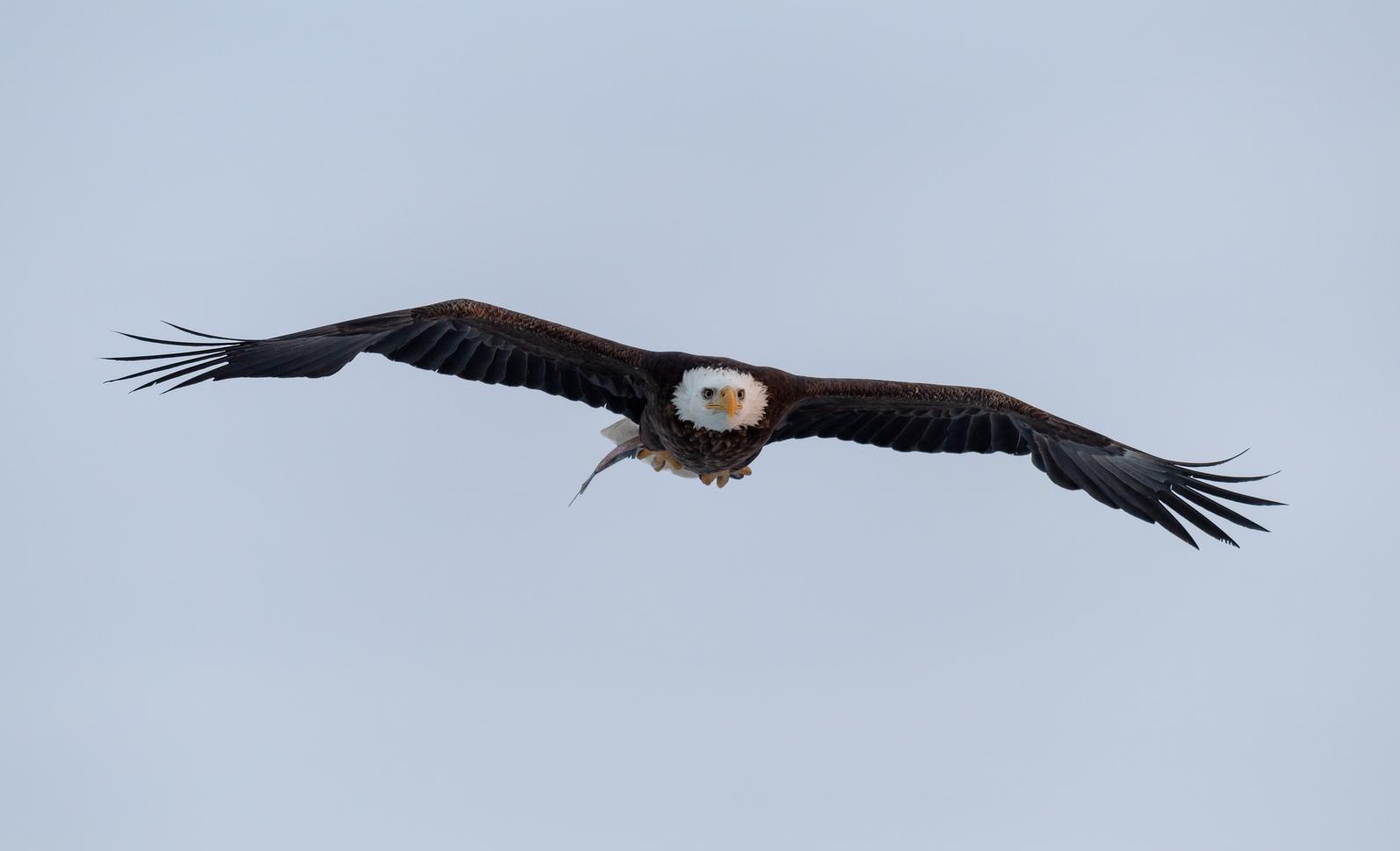 803201e7 Montezuma Audubon Center Programs and Events   Audubon New York