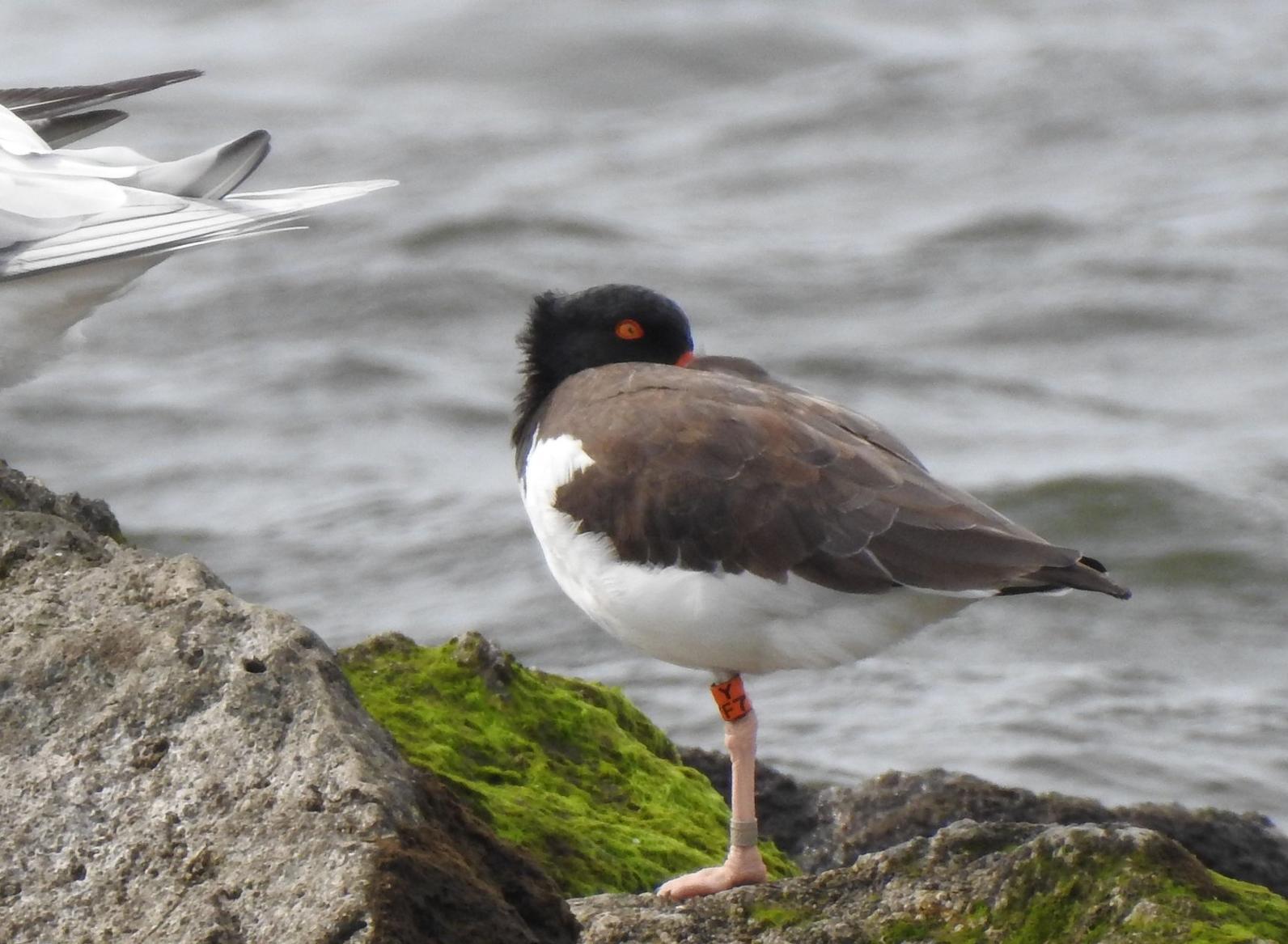 February 2019 | New York News from the Nest | Audubon New York