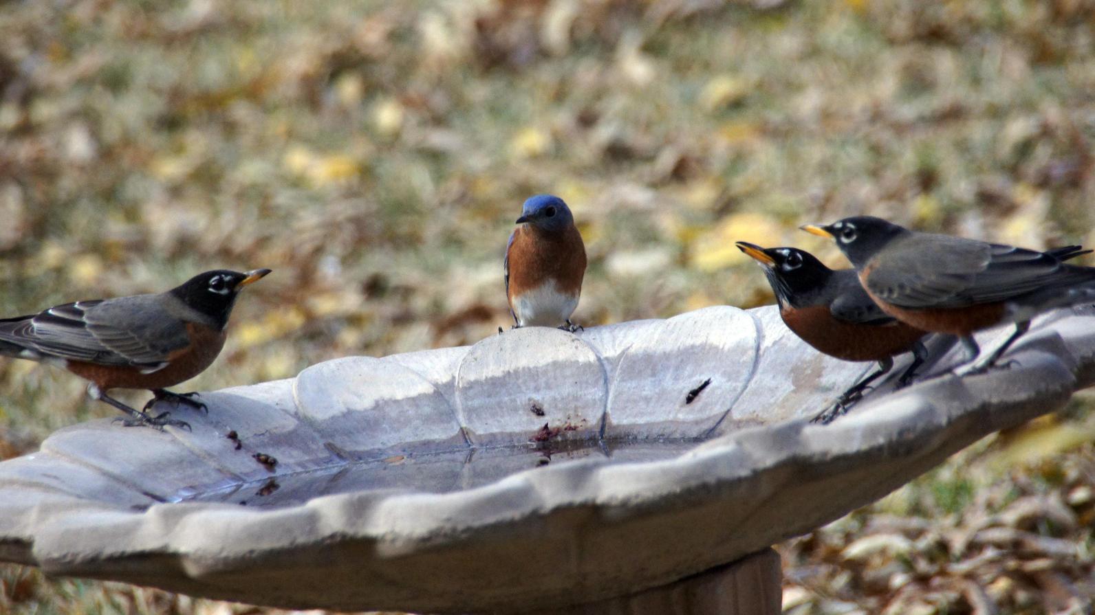 How to make a birdbath - Photo Patrick Denker Flickr Cc