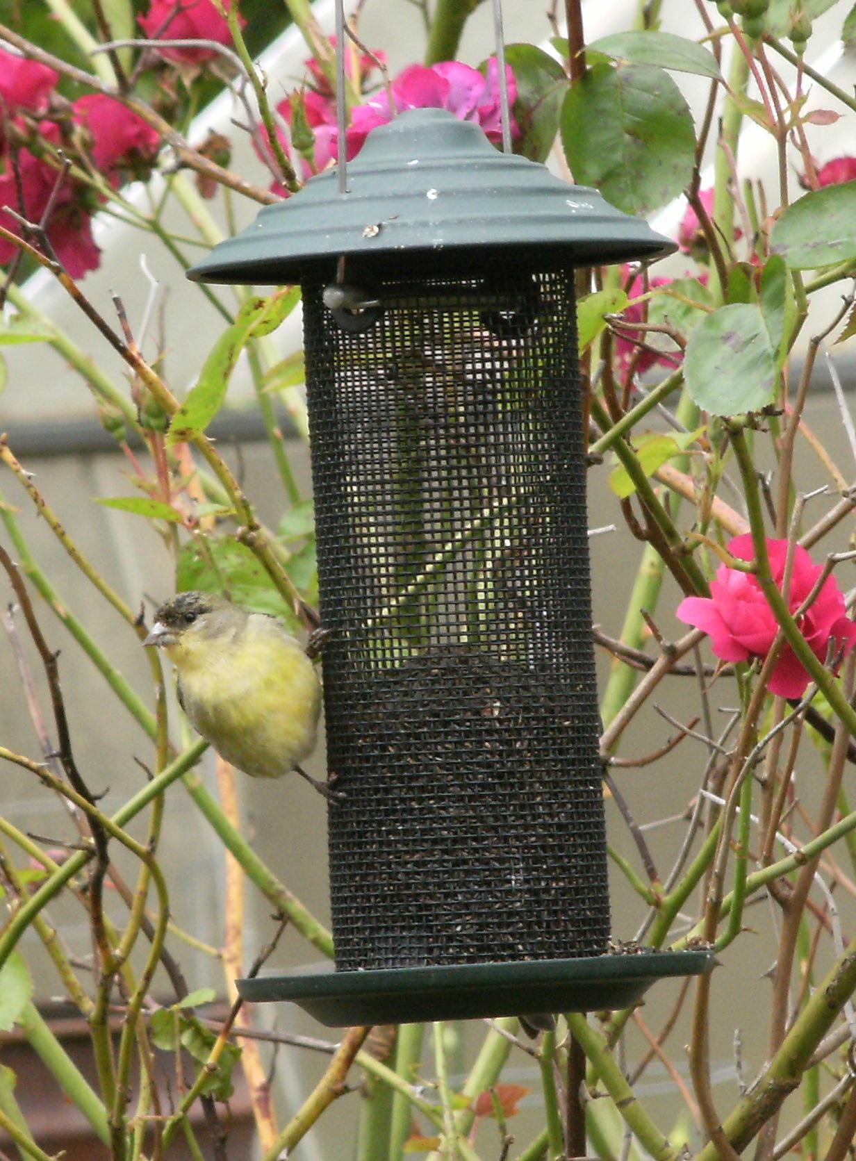 hood finchfeederhangingwhood with thistle hanger hanging feeders shop feeder harmony finch bird