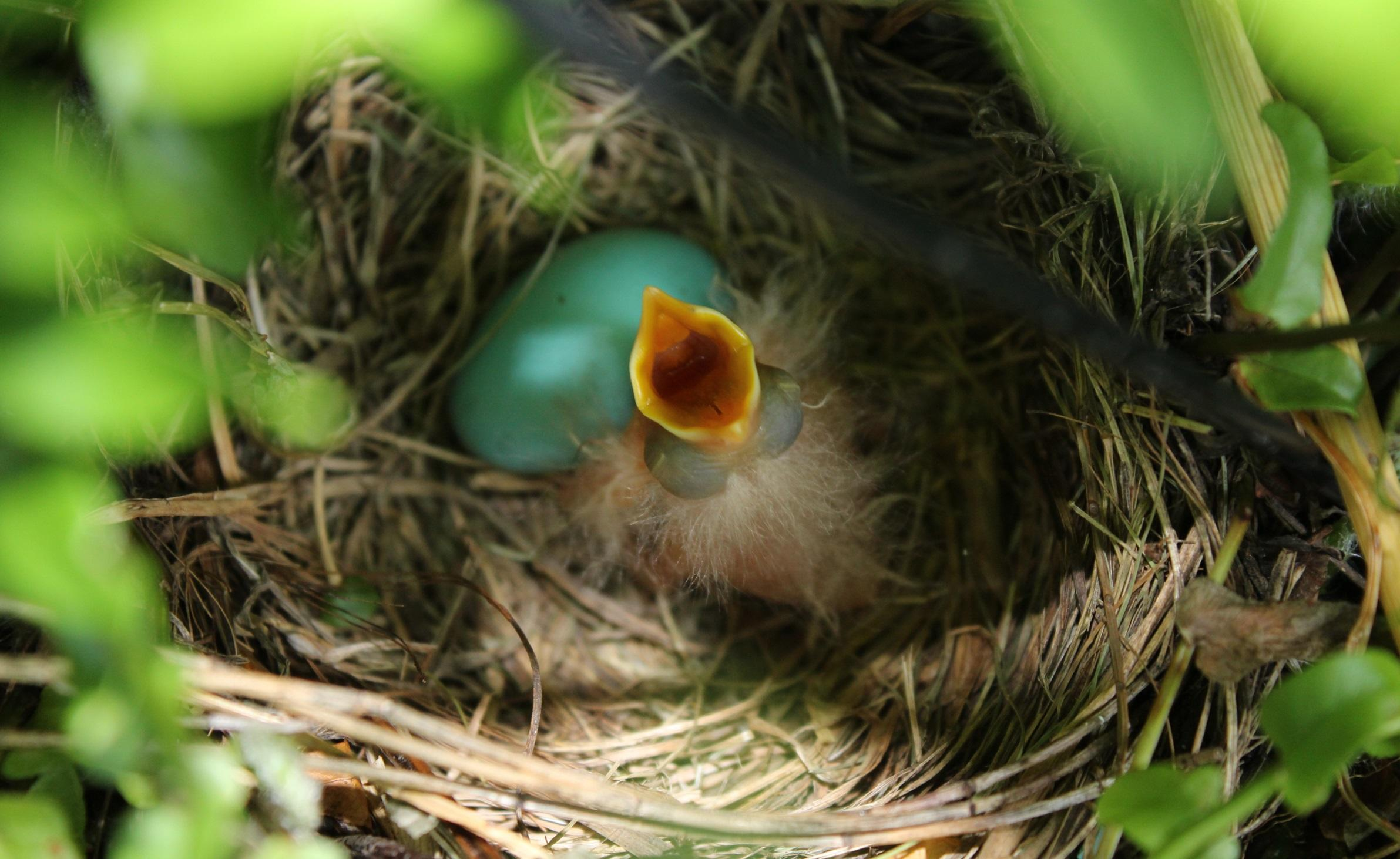 What To Do With an Injured or Orphaned Bird | Audubon New York