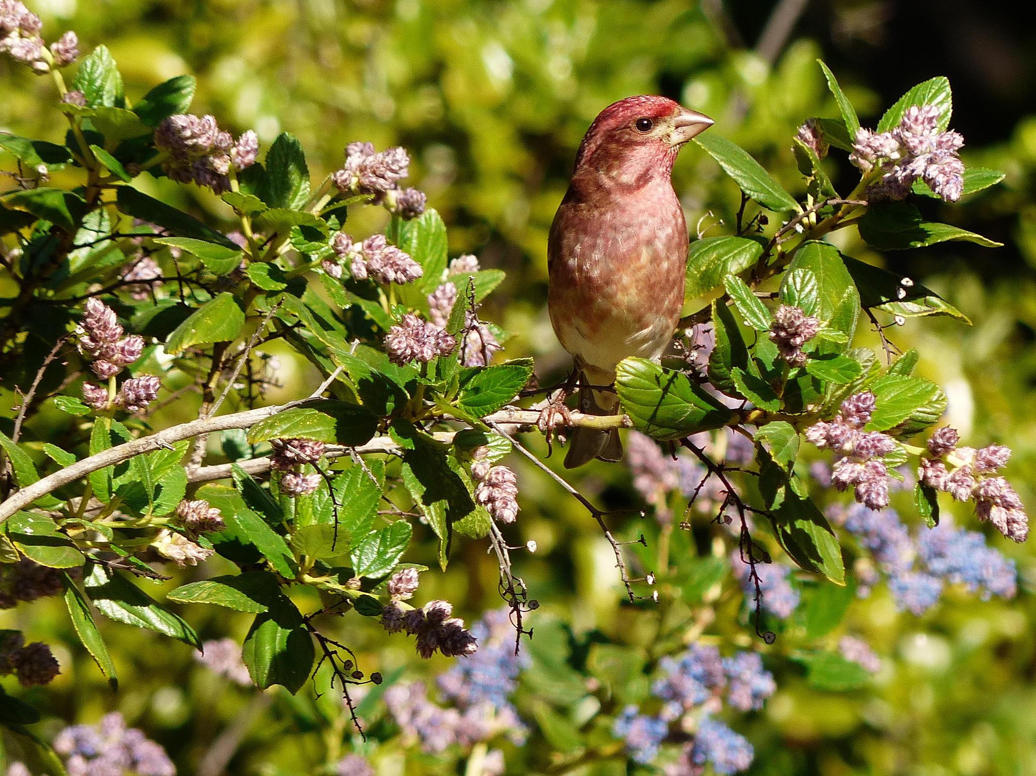 Seasonal Tips For A Bird-Friendly Backyard | Audubon New York