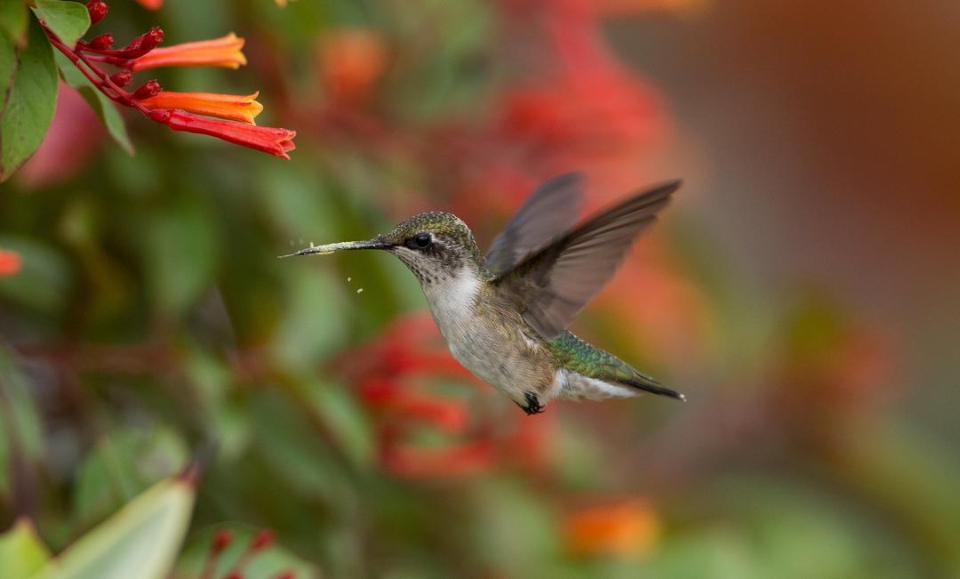 Theodore Roosevelt Sanctuary and Audubon Center | Audubon
