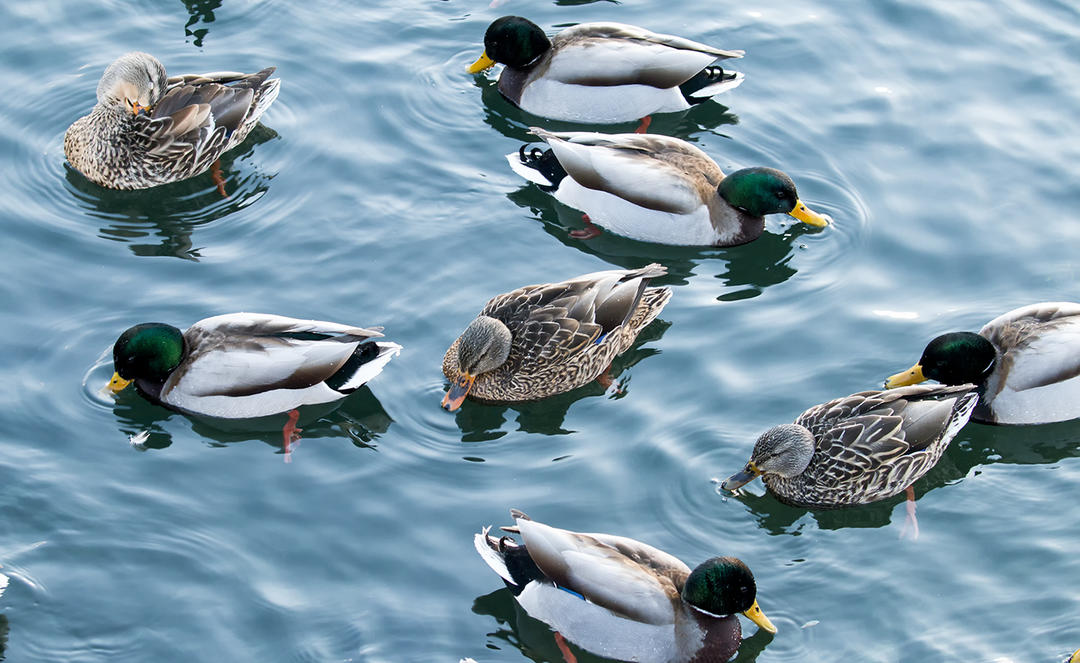 Top State Parks for Birding in the Lake Ontario Region