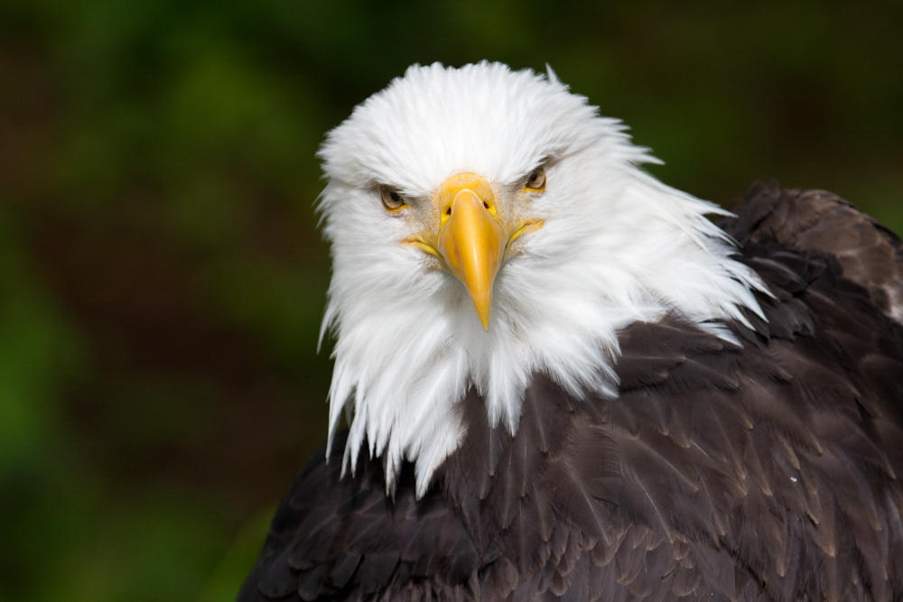 Eagle News Online – Eagle Bulletin
